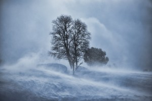 Tree in a snow blizzard with dramatic clouds, heavy wind, and blowing snow